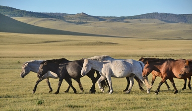 horses 0300
